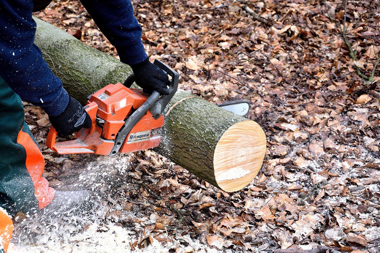 lumberjack-2146509_web